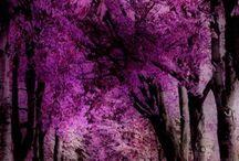 Purple / by Tonia DiFilippo