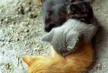 Cats 1 ♥ / by Anne