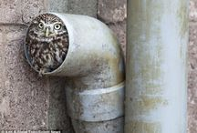 Owls / Birds of Prey are Cool !!! / by Ganece Sands