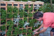 Vertical Gardening / by Doug Green