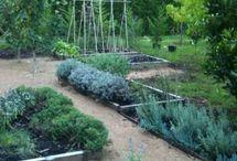 Gardening / by Kayla