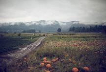 Fall / by Jon Acuff