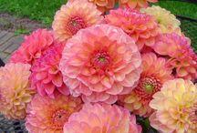Gorgeous Flowers! / by Karmany Sanderson