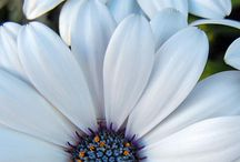 Flowers galore! / by Micah N Jackie Cruise