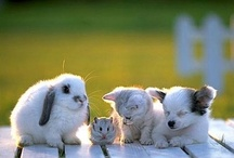 All the Cute / Cute animals and babies. / by ABH-1979