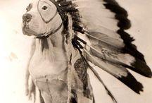 Cuties / animals / by Ixora Fabiola