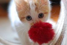 Cute Animals / by Elizabeth