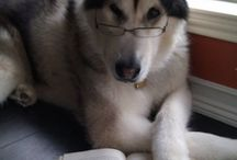 Animals Love To Read Too! / It's not just us humans that love a good book, take a look at these adorable animals!  / by Parragon Books