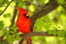 lovely birds / by May khatib