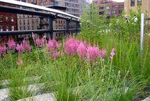 Contemporary Garden & Landscape Design / by Lily Casablanca