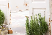 Landscaping with Herbs / by Sabrina and Todd Farber