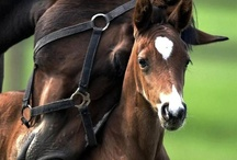 The Equine Page / by FashionattheRaces