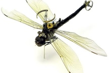 Dragonfly Love / I kind of have this thing for dragonflies. This is where I'll pin dragonfly related things. :) / by Crystal Caron