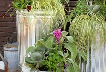 Container Gardening! / by Denise Morrison