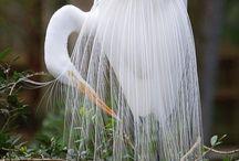 Natural Beauty / by kaynara jewellery