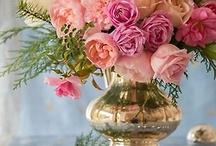 Flowers / by Terri Freiss