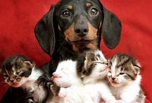 All things Doxie- thanks for the memories Patches & Jocelyn:)  / by Angela Searcy