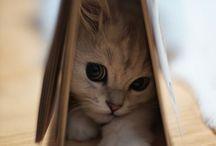kitties / by Lori Paulson