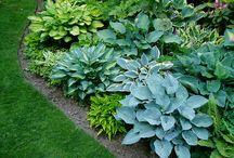 garden ideas / by Michelle Ross