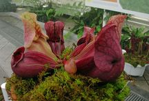 Carnivorous Plants / by Lisa B