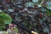 Gardening the right way! / by Debora Pinkos