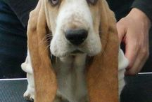 Dogs & Puppies / Domestic dogs, pets, all breeds / by ** Cheryl **