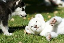 Puppies/kitties / by Meghan Barr