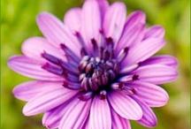 Flowers & Veggies / by Michaela Jessen