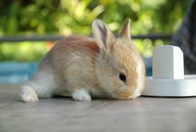 bunny madness / by Jamar Burl