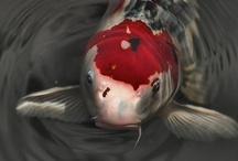 Tropical & Salt Water Fish I Like / by Kim Vaughn Sowards