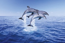Dolphins... / by Renee Emerson