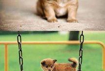 Cute animals / by Jason Abisch