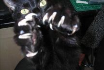 CAT SCRATCH FEVER!! / MEOW / by Vicki