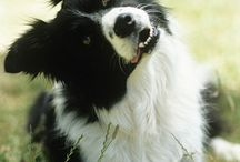 Animals ~ Dogs / by Carroll Wilson