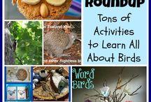 birds / by wombats ballykin