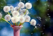 Make A Wish Then Blow / Dandelions / by Debbie Quitoriano