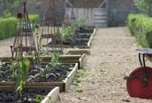 Garden  - potager / by Diana Jacobsen