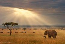Aahh  Africa / by Janet VanBuskirk