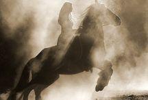 Horses / by Melissa Dockstader Zitting