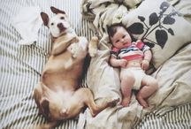 Pups  / Dogs, dogs, and dogs  I want them all / by Malorie Rice