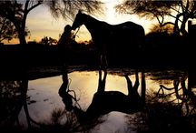 Getting started with horses! / 2014 is the Year of the Horse! For yourself, for your kids, for the whole family - there's no time like the present to try horseback riding!  / by Time To Ride