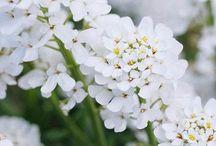 Whitetail farms gardens / by Kristine Adamiec