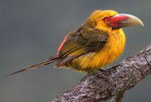 Birds / by Karla Keffer