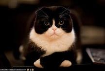 Fotogenic Felines / by paige =^..^=