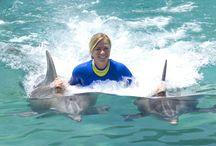 Swim with the Dolphins / Swim with the Dolphins -  Riviera Maya , Cancun, Puerto Morelos , Playa del Carmen , Tulum swim porpoises  / by ChichenItza Bob