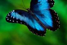 Butterflies / by Effie Smith