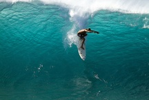 Surf Trip / by AntiQueda Surfwear