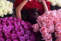 Flowers 💐🌸🌷🌺🌼🌹🌻 / by Lauren Elizabeth