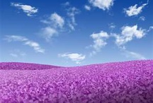 Beautiful Flowers / by Cheryl Silva Burrhus
