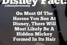 Disney / Fun at disney / by Miki Salisbury Thompson